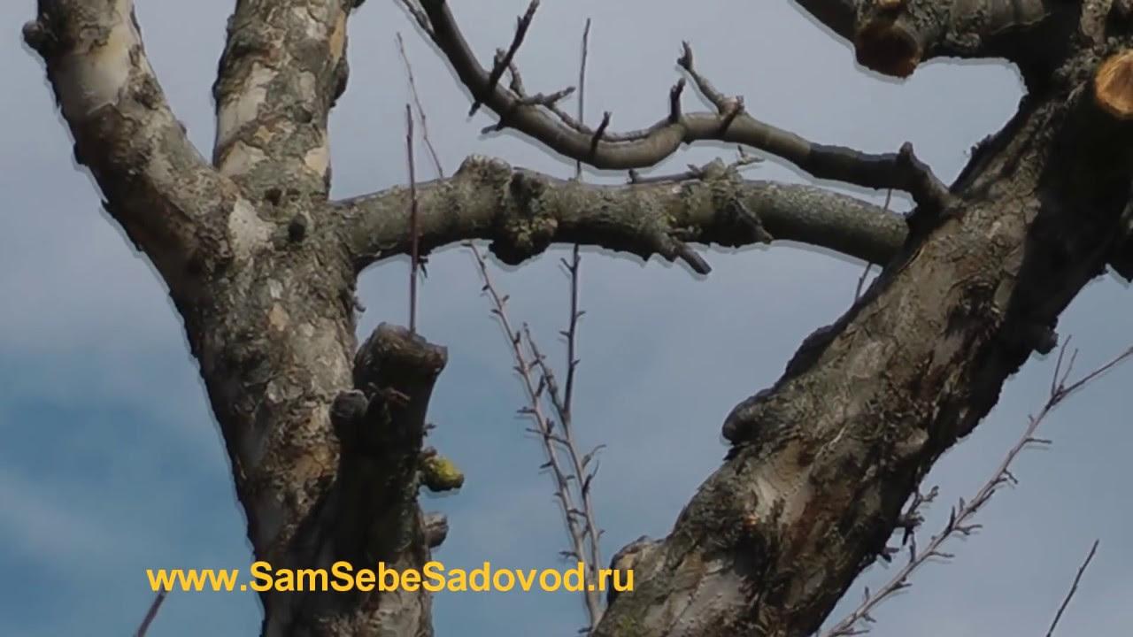 пошаговая инструкция обрезания деревьев