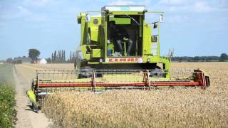 Claas Dominator 105 cutting wheat