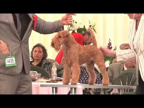 Southern Counties 2017 Dog Show - Terrier group FULL