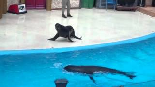 Sea Lions LIVE Goes Wrong