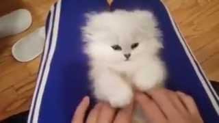 قطة جميلة جدا و كيوت !! Very cute cat :)