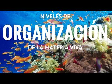 Niveles de organizaci n de la materia viva youtube for Organizacion de un vivero