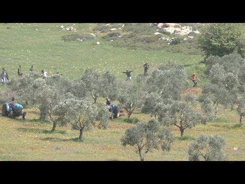 Settlers assault Palestinian farmers, al-Mughayir, Ramallah District, 22 March 2018