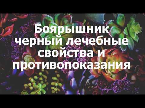 Боярышник черный лечебные свойства и противопоказания