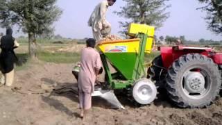 145 Adeel Ahmed agriculture farm @depalpur, pakistan
