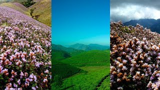 Munnar on the way in search for Neelakurinji | Kurinji year 2018