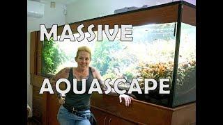 MASSIVE 500g Planted Aquarium in Mexico