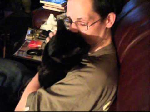 CHARLIE THE TALKING BURMESE CAT: VERY FUNNY KITTY CAT VIDEO