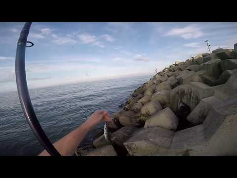 How To Catch Mackerel From Harbour In Ireland