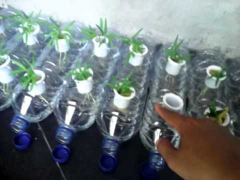 Kreasi Net Pot Hidroponik Dari Pipa 1 Inci Ke Botol Aqua