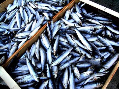 ¿Cuáles son los efectos positivos de comer pescado?