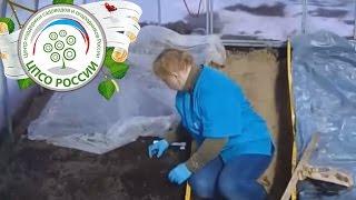 выращивание редиса в теплице зимой на продажу: особенности, фото, видео + отзывы