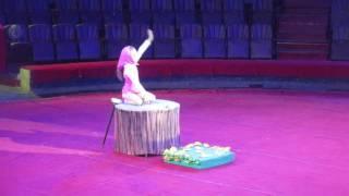 Маша и медведь. Международный фестиваль в Одессе. Цирк.