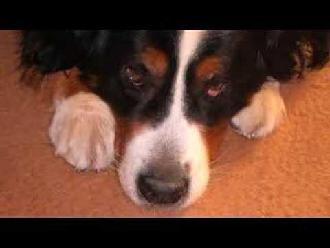Loriot Wums Gesang: Ich bin ein kleiner Hund