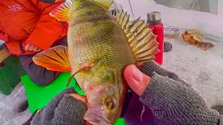 В ТАКОЙ МОРОЗ ЛУЧШЕ ИЗ ПАЛАТКИ НЕ ВЫЛЕЗАТЬ! Рыбалка на безмотылку (мормышку)