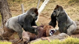 LIVE: Discovery Wild Animals - Most Amazing Moments Of Wild Animal Fights - Animal Documentary 201̣9