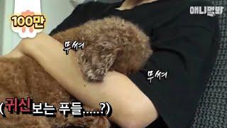 식스센스 반전은 저리가라네요.. ㅣ Here's The Ending Of A Poodle Dog Who Can See Ghosts! *Shocking Plot Twist*