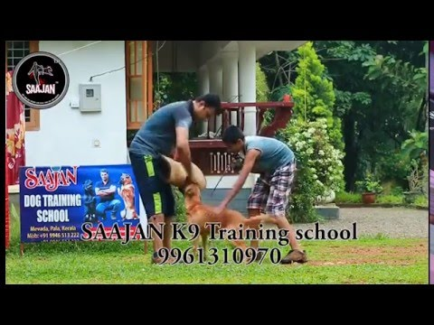 saajan k9 training school