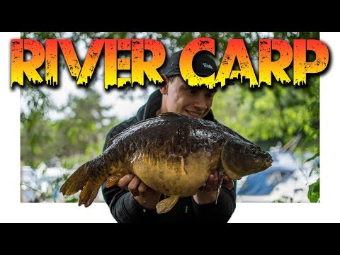 RIVER CARP FISHING!