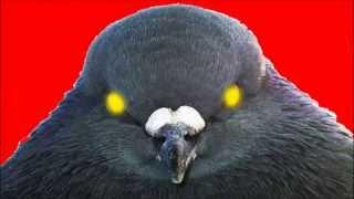 �������� ���� Курлык-курлык психоделическое видео: разговор двух голубей ������