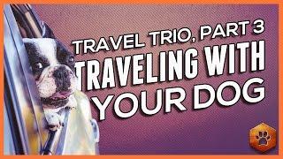 Travel with your Dog - Holiday Travel (3 of 3)