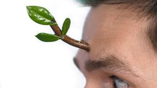 Tree Grows On Face Surprise!
