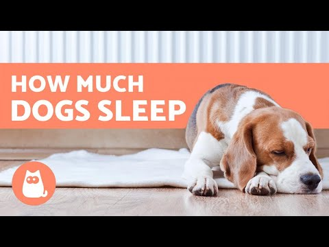 image for How Many Hours a Day Do Dogs Sleep? - Puppies, Adults & Seniors