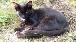 Отдам черного котенка, котик, возраст 3 месяца. Красноярск