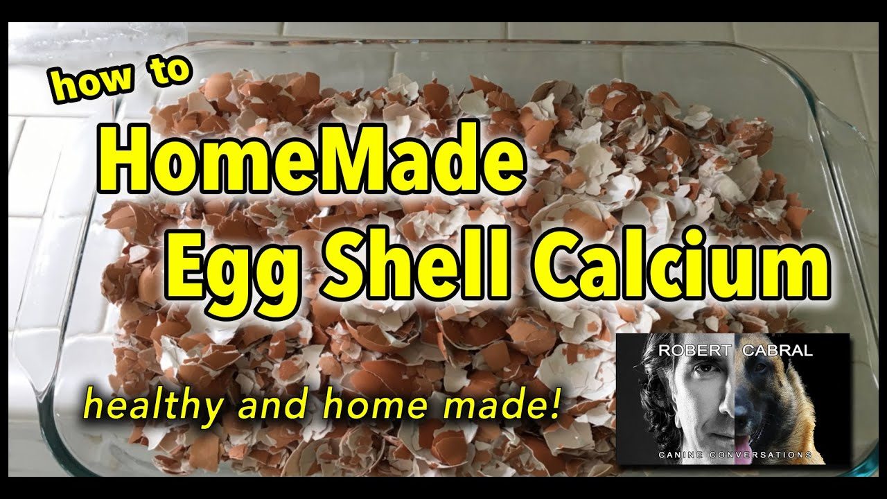 How to Make Egg Shell Powder for Your Dog - Dog Training ...