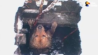 He Was Stuck In A Sewer But His Rescuers Never Gave Up