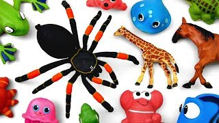 Learn Wild Animals for Kids Through Toys and Learn Colors for Kid