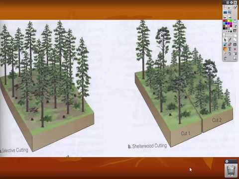 US Forests Lecture