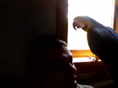 Talking Parrot, talks up a storm