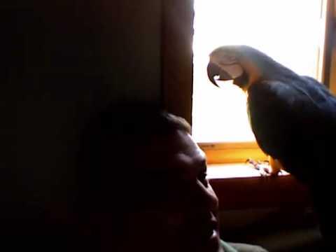 Talking Parrot, talks up a storm