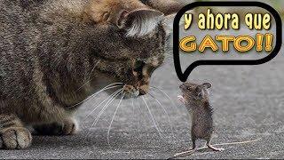 tom and jerry reales - juego de gatos y ratones