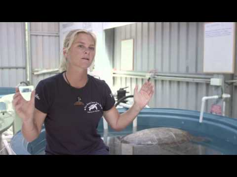 water3 proudly partners with Eco Barge Clean Seas - Interview with Libby Edge (2min cut down)