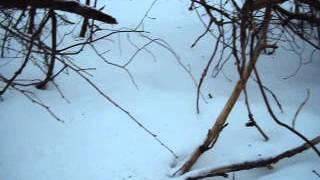 Как поймать фазана