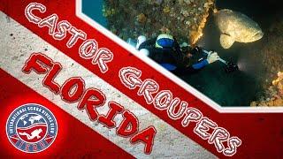 M/V Castor Wreck Goliath Grouper Aggregation Scuba Dive | Delray Beach, Florida