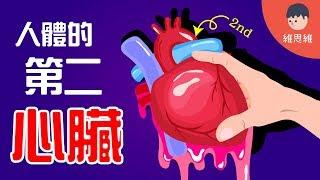【健康小知識 】原來人體還有第二個心臟!要健康就要保護好它!(#CC字幕) | 維思維