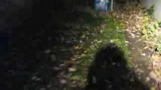 Strange Creature Caught on Tape - Mothman? Alien? Flatwoods Monster?