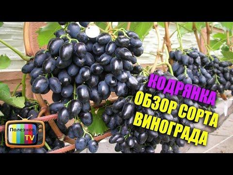 Сорта винограда для средней полосы России, юга Западной