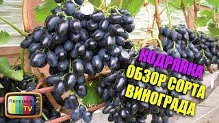 видео Виноград «Августин»: описание сорта, фото, отзывы