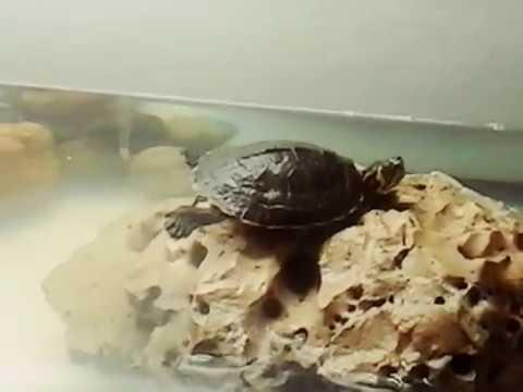 Meine schildkröte beim sonnen