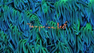 Tangerine Reef - The Audiovisual Album by Animal Collective & Coral Morphologic (Official Film)