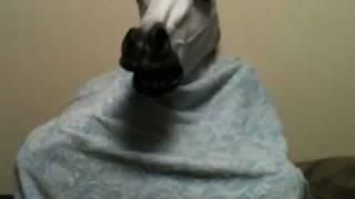馬が主役の踊る大捜査線。
