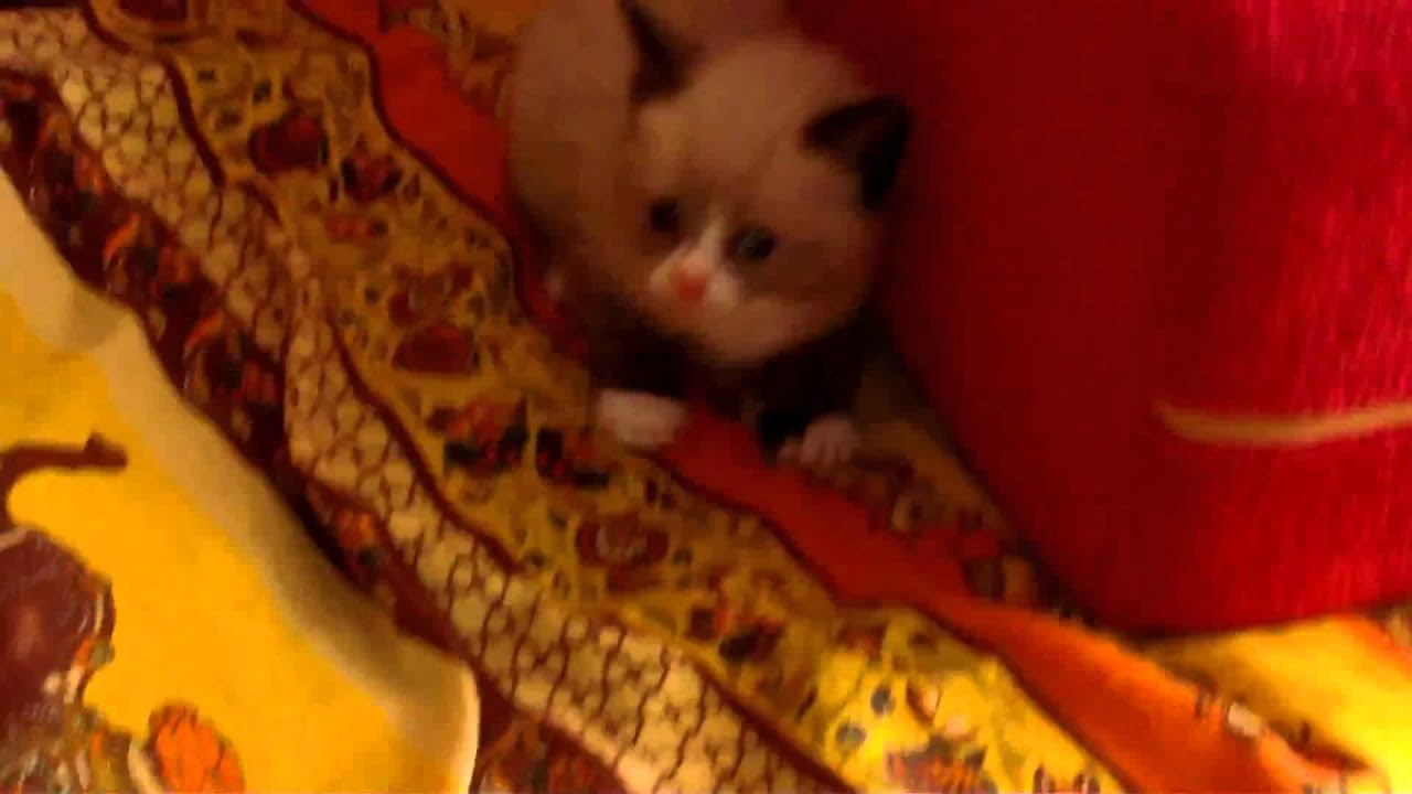 how to get a kitten to not be scared