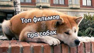 Топ фильмов про собак