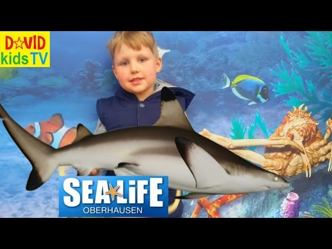 ►SEA LIFE Germany Акулы Самый большой аквариум в Германии the biggest aquarium in Germany