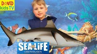 ►SEA LIFE Germany Акулы Самый большой аквариум в Германии the biggest aquarium in Germany(Давид с родителями посетил самый большой #SeaLife в Германии г. Оберхаузен. Окунитесь вместе с нами в волшебный..., 2016-05-30T15:09:16.000Z)