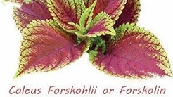 Forskolin and apple cider drink daily for weight loss